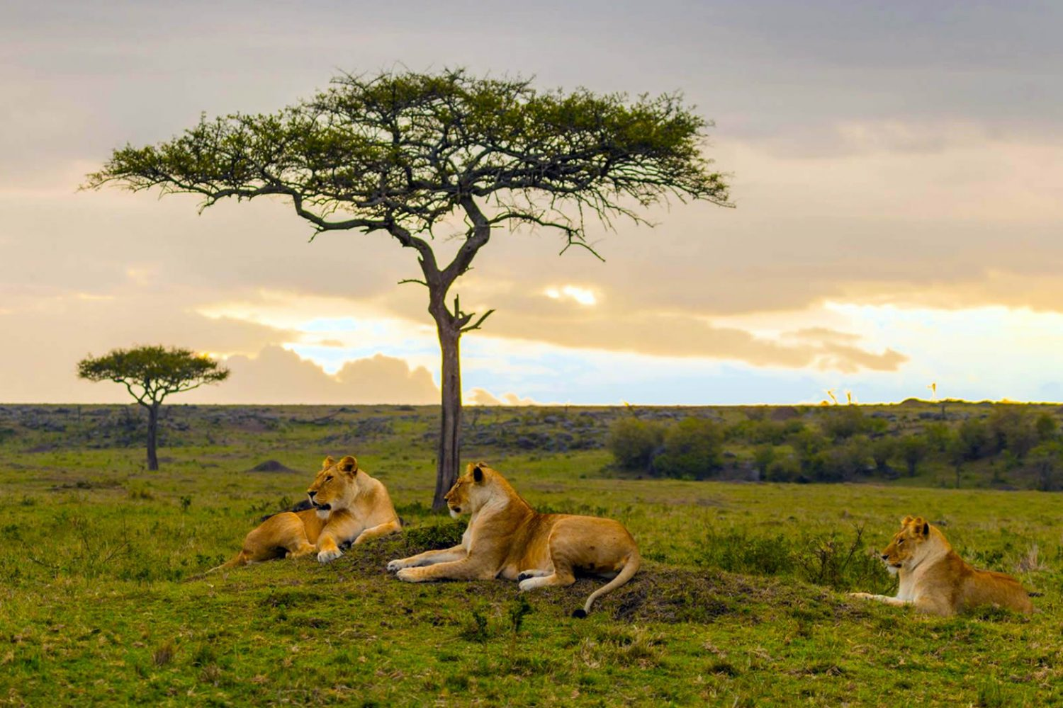 Kenyan Safari Tours and Vacations