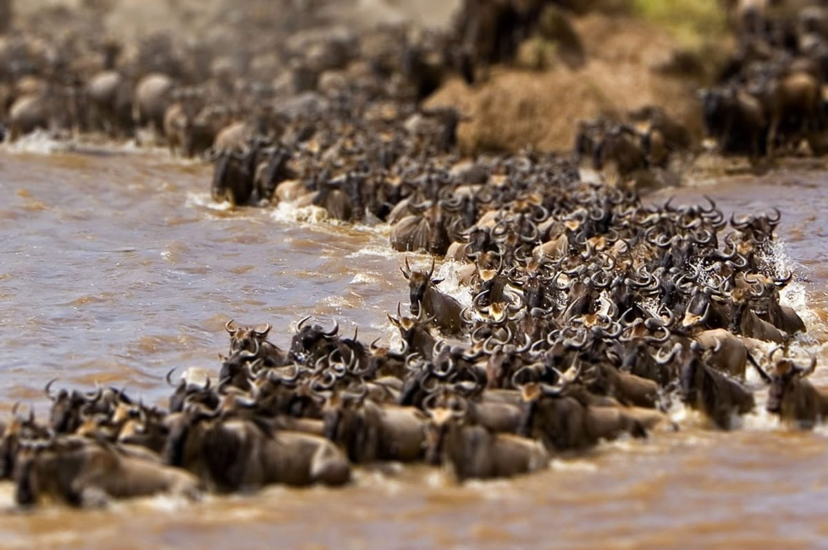 4-Day-Great-Wildebeest-Migration