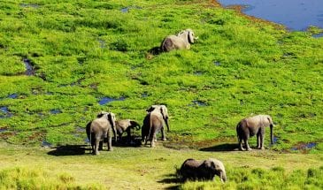 Amboseli-Serena-Safari-Lodge_elephants-at-observation-hill