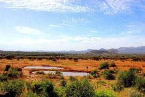 A watering hole in Tsavo west national park
