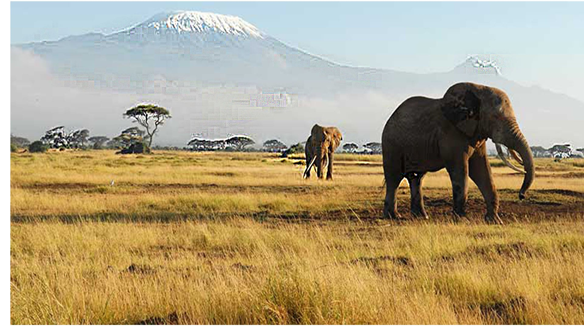 Mt Kilimanjaro view from Amboseli